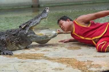 crocodile entertainment abuse thailand