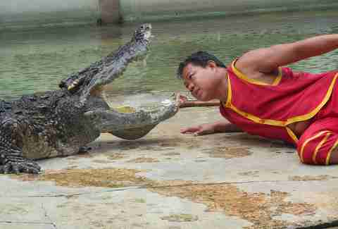 crocodile entertainment abuse thailand