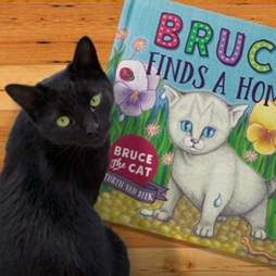 rescue cat bruce new zealand