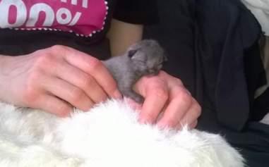 newborn kitten rescue bruce