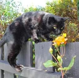 rescue cat new zealand bruce