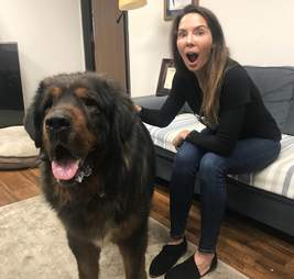 Actress posing with rescued Tibetan mastiff