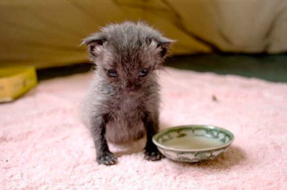 Tiny Kitten Found Crawling On Road During Rainstorm Is Barely Recognizable Now