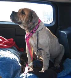 dog rescue bait dog mexico