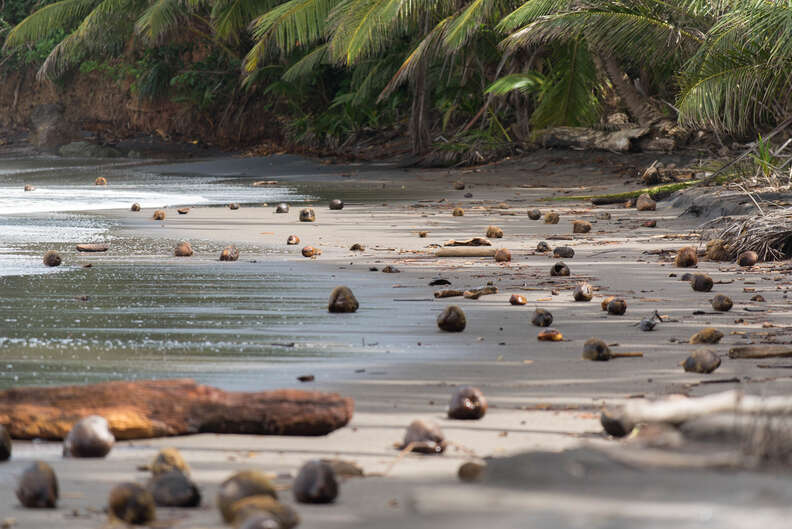 Number One Beach, Dominica, Caribbean