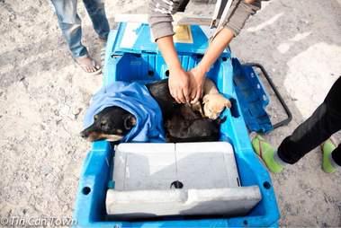 Dogs inside toy car