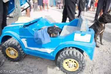 Dog inside blue toy car