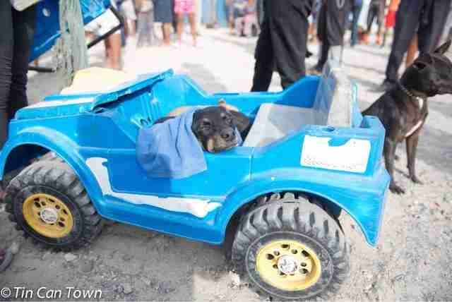 Dog inside blue toy car