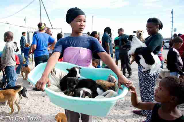Woman carrying puppies in basin