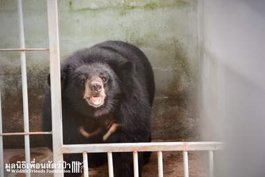 'Pet' bear smiling when rescuers open her cage