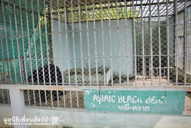 Caged 'pet' bear in Thailand