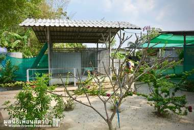 Cage in family's yard in Thailand