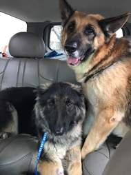 Bonded dogs saved from Tennessee breeder