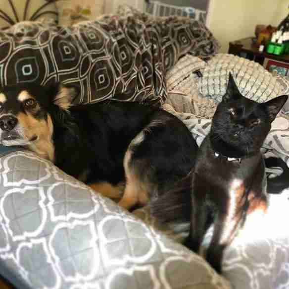 cat with no eyelids and her dog best friend