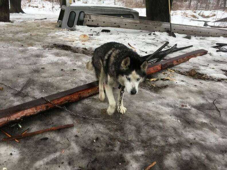 Chained up dog on snowy ground