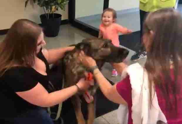 Dog That Was Accidentally Flown to Japan Is Back Home And So Incredibly Happy
