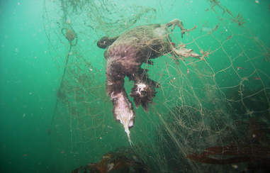 Dead sea animals caught in fishing net