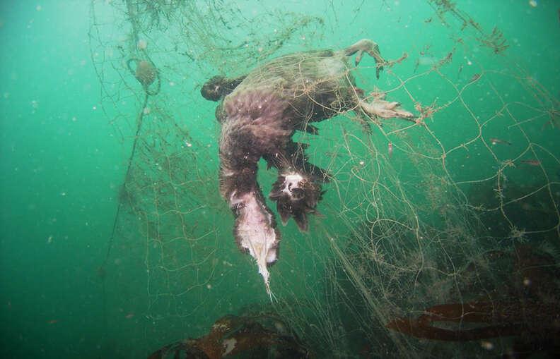 Dead sea animals caught in fishing net