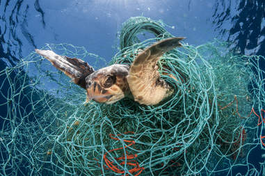 Turtle caught in a ghost net