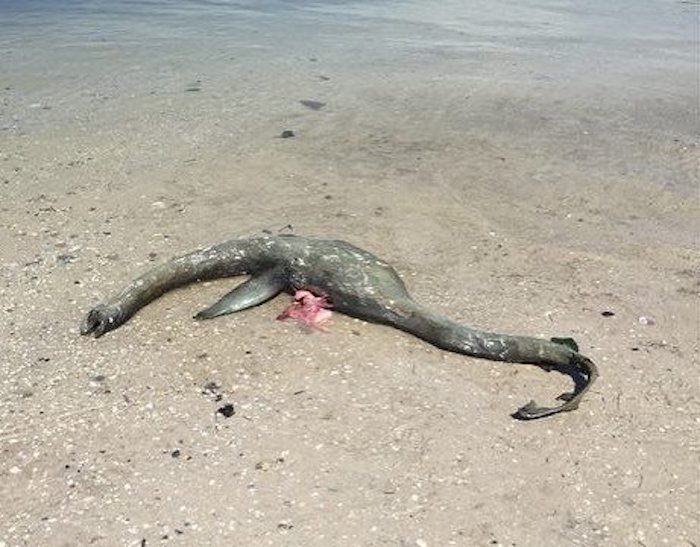 A Mysterious, 'Loch Ness-Type' Sea Creature Just Washed Up on a Georgia Beach
