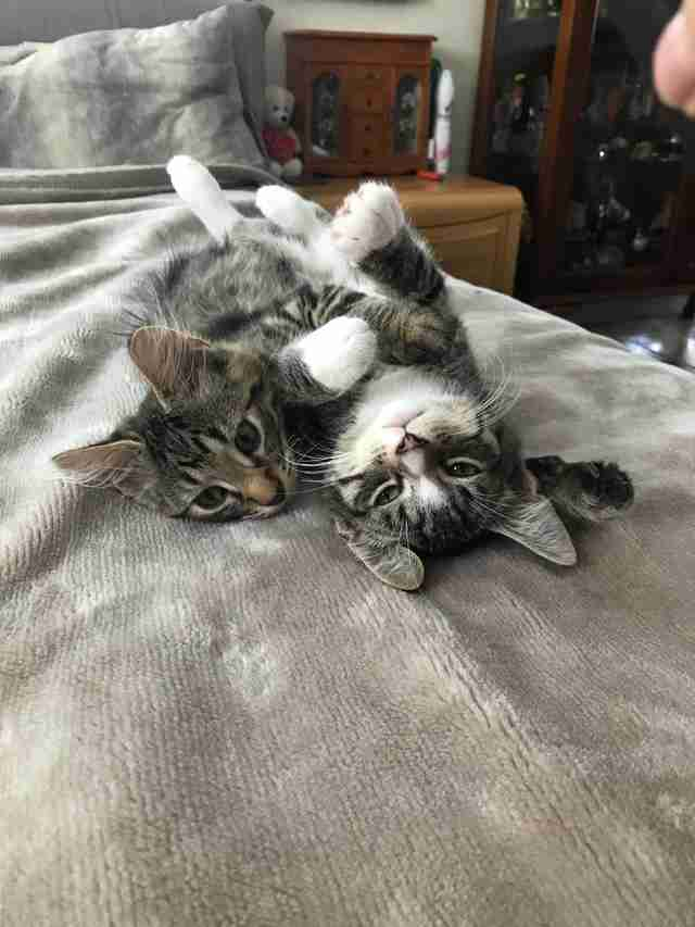 kitten brothers adopted together