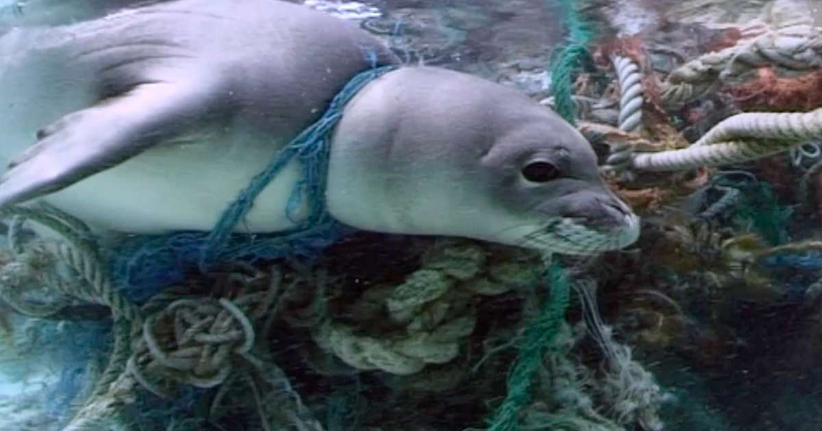 Ghost Fishing Nets Are Killing Thousands Of Marine Animals