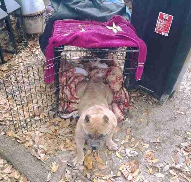Flaco, perro abandonado en la perrera