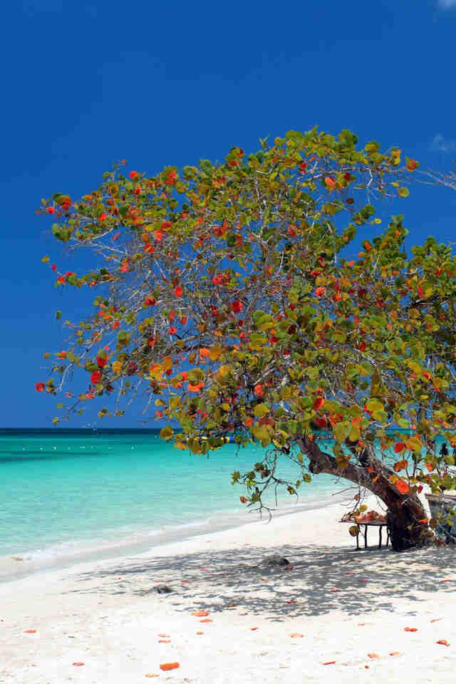 The Six Best Beaches in Jamaica | WanderWisdom |Jamaican Black Sand Beaches