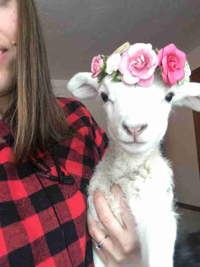 Baby lamb rescued from Ontario farm
