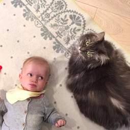 cat loves her new baby sister