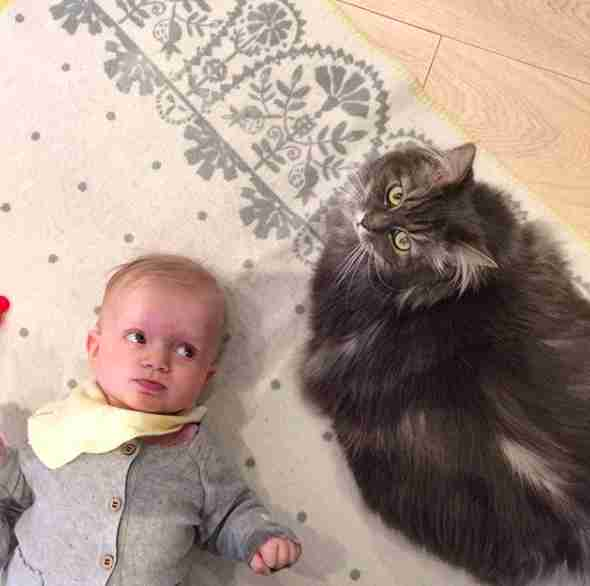cat loves her new baby sister