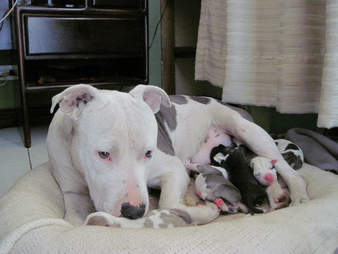 Dog with litter of newborn puppies