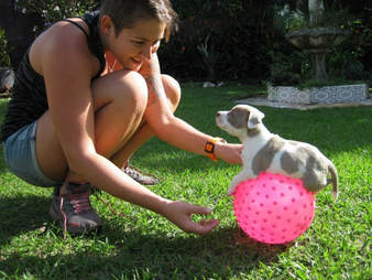 Woman helping dog exercise on exercise ball