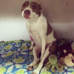 Injured dog sitting on her backside