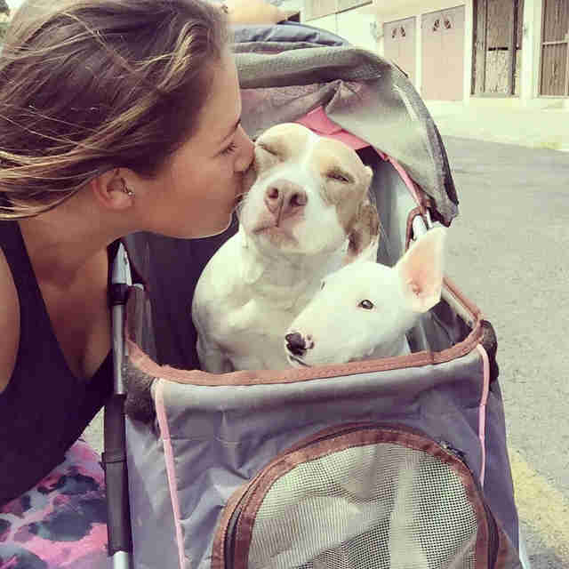 Woman kissing dog in stroller
