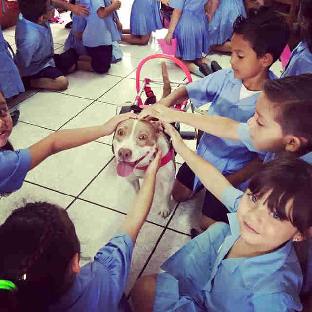 Dog in wheelchair visiting school students