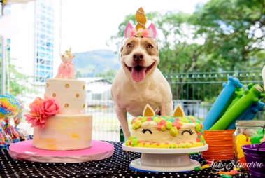 Dog with birthday cakes
