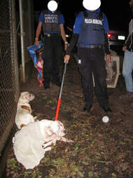 Police confiscating dogs at drug lab