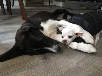 dying puppy gets a best friend