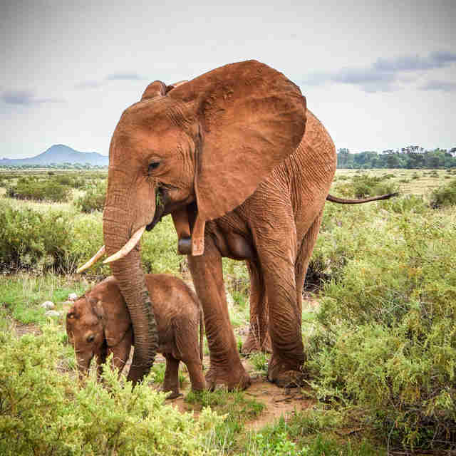 Elephant mother with baby calf