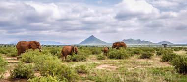Elephant herd on savannah