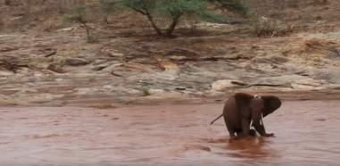 Mother elephant with calf between her legs