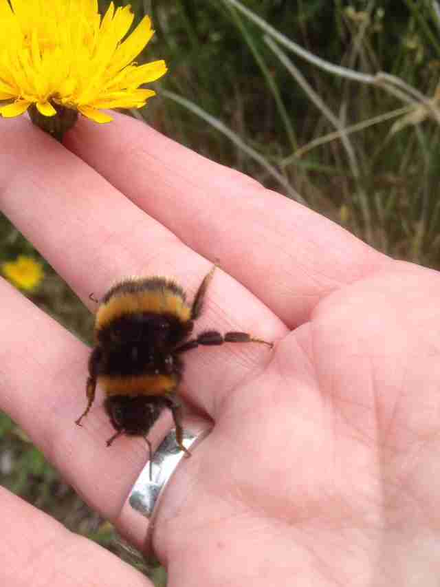 Woman Forms Incredible Bond With Bee Who Needed A Friend