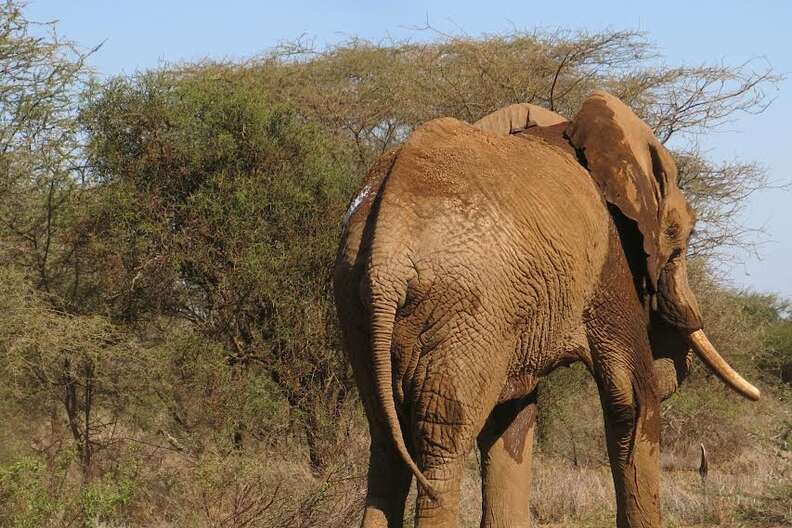baby elephant rescue kenya
