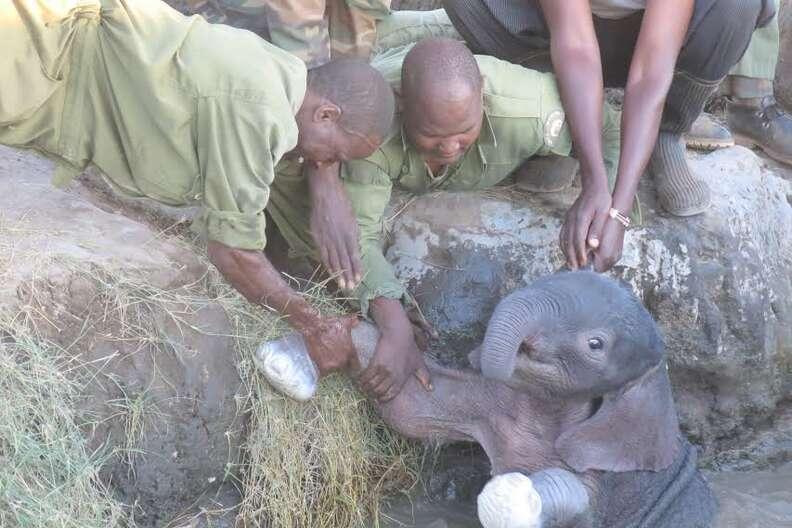 elephant calf rescued kenya