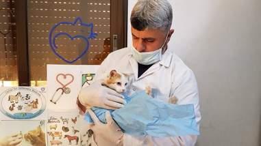 Vet holding cat patient