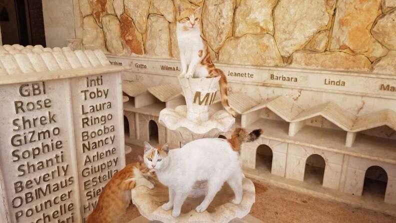 Cats inside cat village
