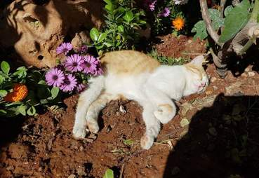 Cat sleeping in sunshine