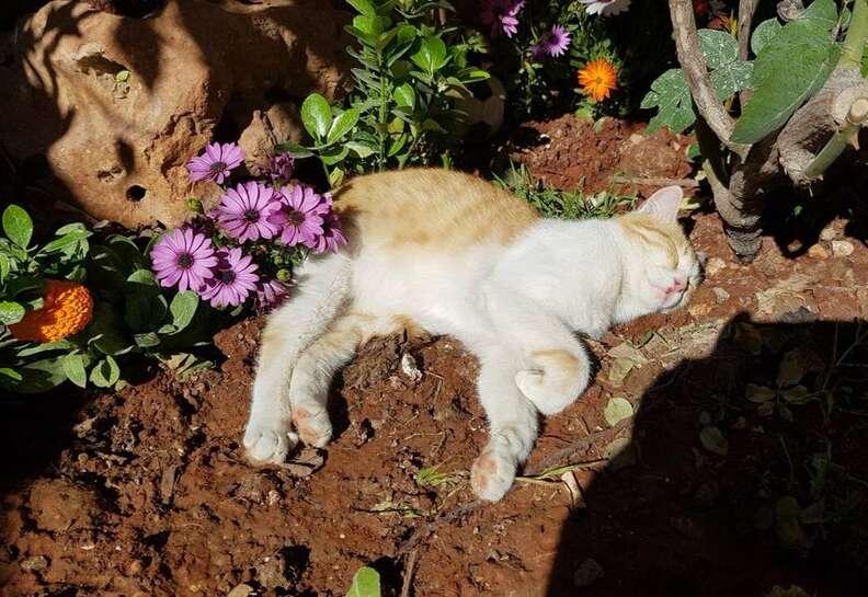 Cat sleeping in sunshine