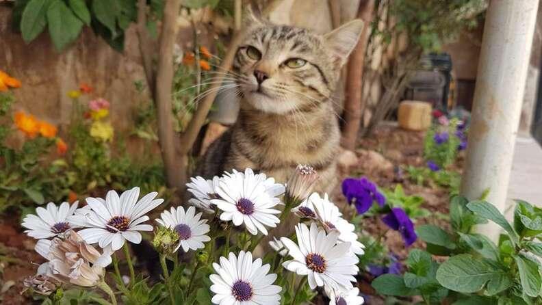 Cat enjoying a flower garden